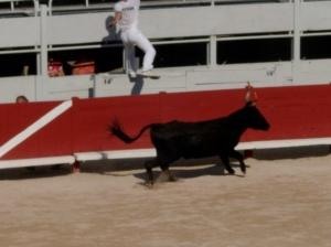 """Bullfight""... Provençal style!"